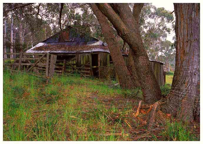 Bruny-Island-shearing-shed