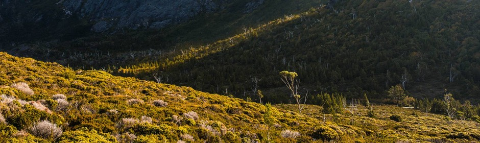 Late afternoon, Cradle Mt NP