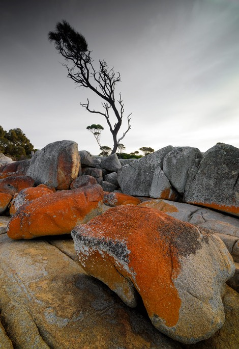 Lichen and tree, Bay of Fires