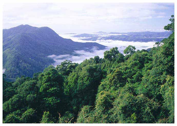 view-over-rainforest-at-dor